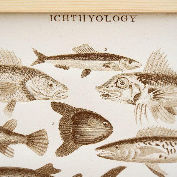 Ichthyology Siebdruck