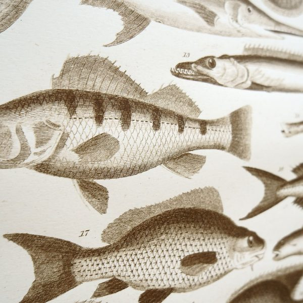 Siebdruck Fischkunde