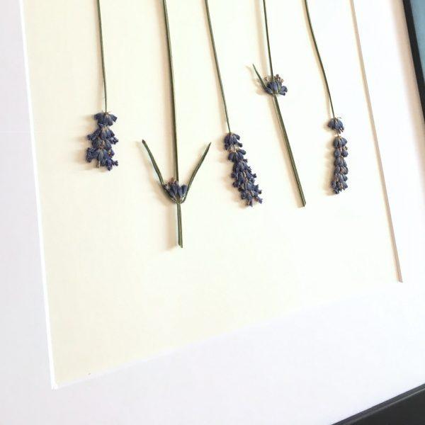 Lavendel Herbarium