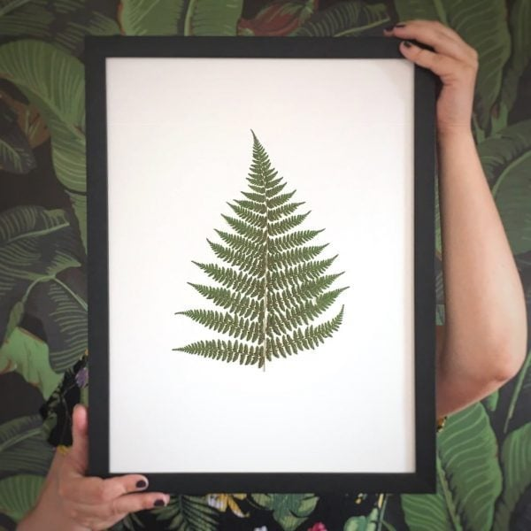 Farn Herbarium