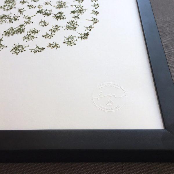 Wiesenkräuter Herbarium