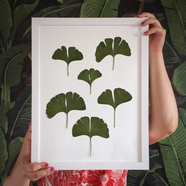 Ginkgo Herbarium