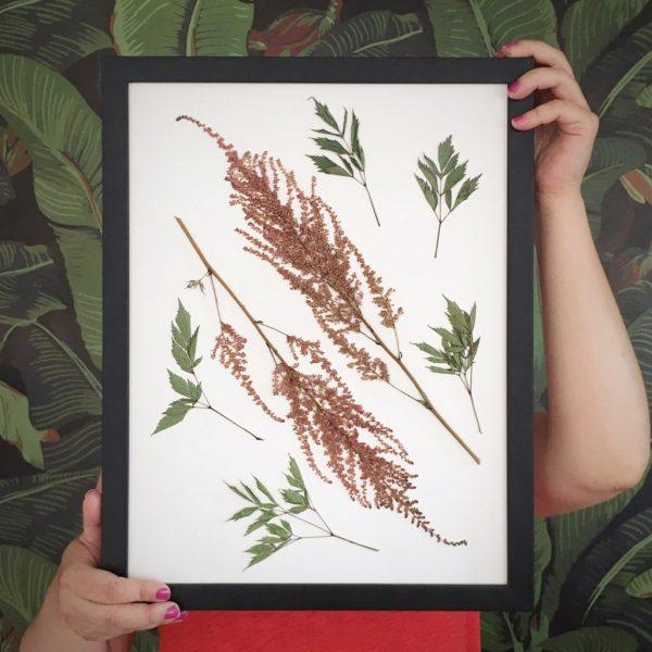 Götterkraut Herbarium
