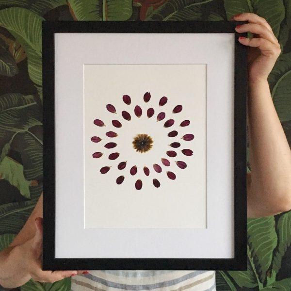 Herbarium Dahlie