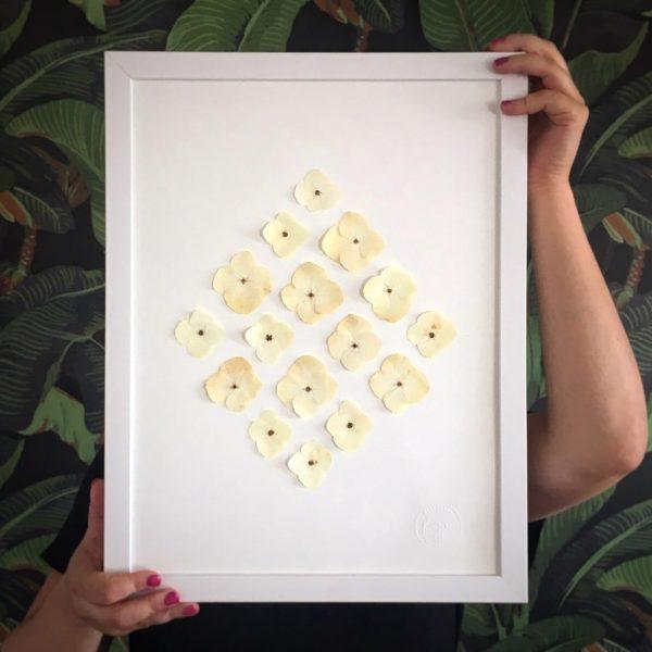 Hortensie Herbarium