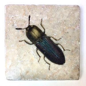 Marmor Käfer