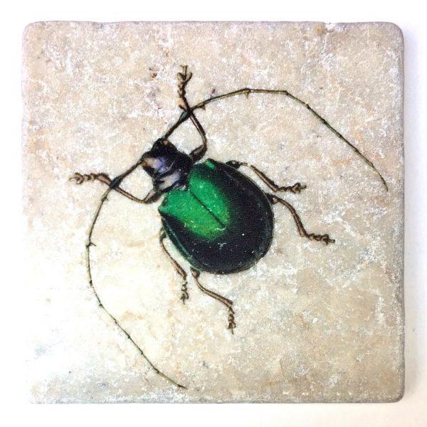 Marmor Käfer 2