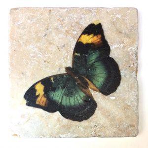 Marmor Schmetterling