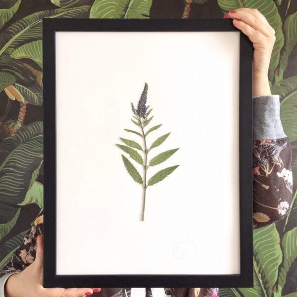 Wiesenfund Herbarium