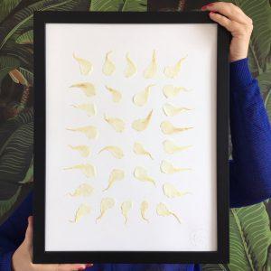 Oleander Herbarium