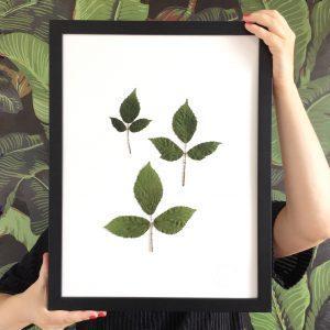 Rose Herbarium
