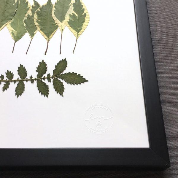 Blätter Herbarium