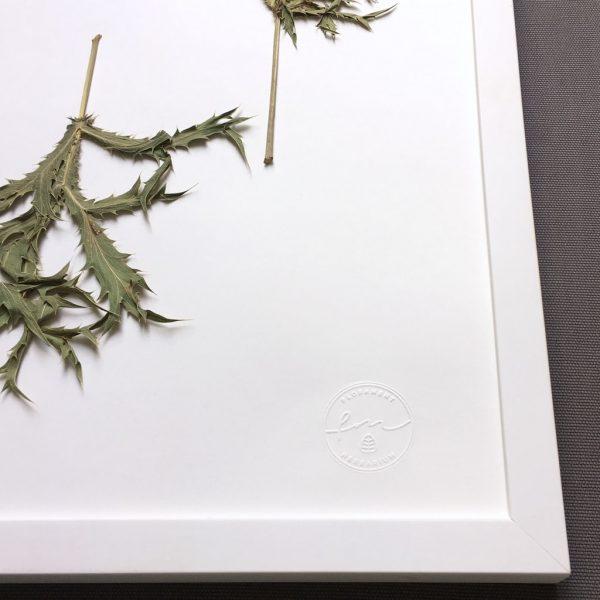 Distel Herbarium