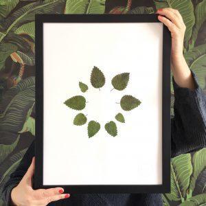 Kräuter Herbarium